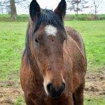 馬の顔の写真