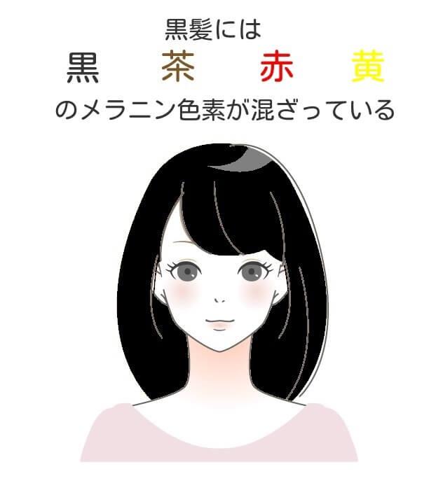 日本人の黒髪の説明