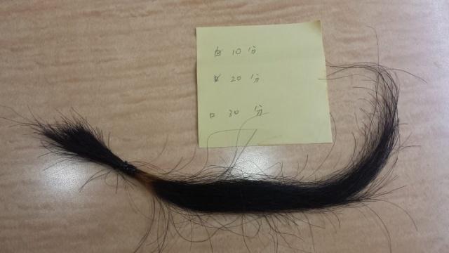 五日後 10分間リンゴ酢に浸けた髪の毛の結果の写真