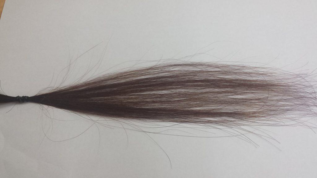 アッシュグレーカラーで染めた後の毛束 ブリーチ2回 白背景