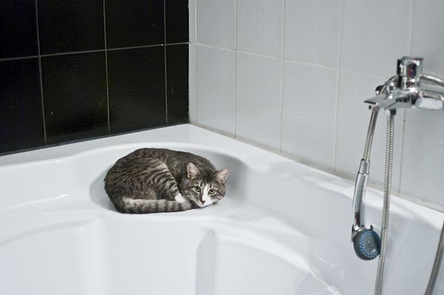 お風呂場にいる猫の写真