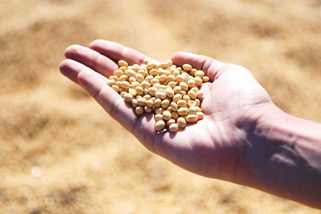 手のひらにある大豆の写真