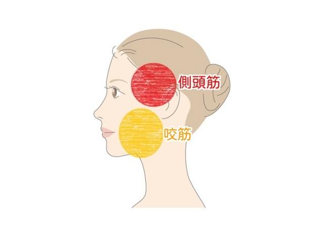 咬筋と側頭筋の説明イラスト