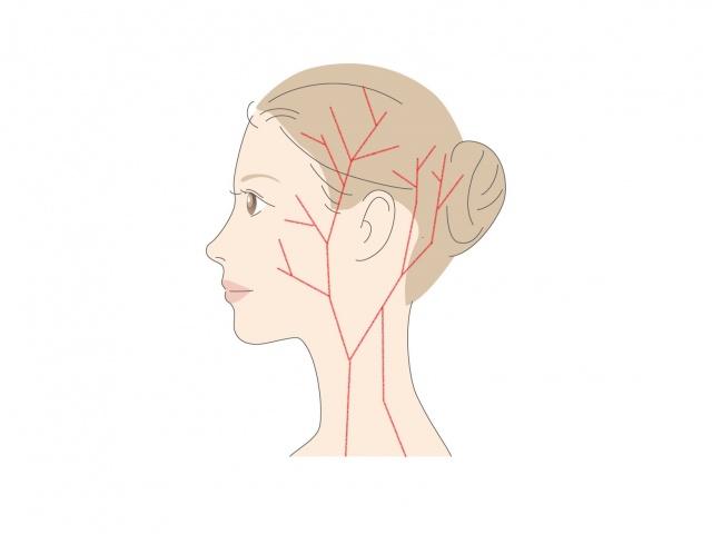 頭の毛細血管のイラスト