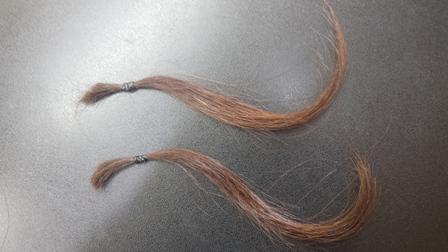 黒い髪の毛束 黒背景