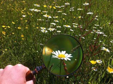虫眼鏡と花の写真