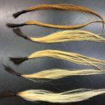 1~6回ブリーチした髪の毛束6本の写真