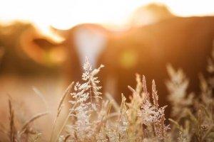 オーガニック植物の写真
