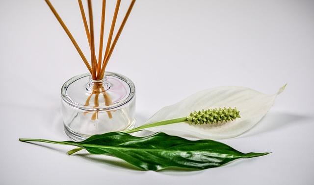 植物とオイルの写真