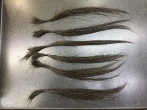 ベージュに染める前の髪の毛ベージュに染める前の髪の毛の写真