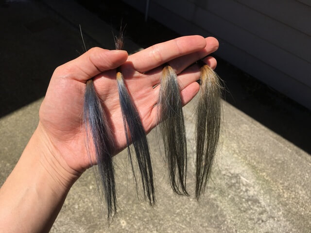 日光の下のマットアッシュのの髪の毛ブリーチ3~6回の髪の毛の写真