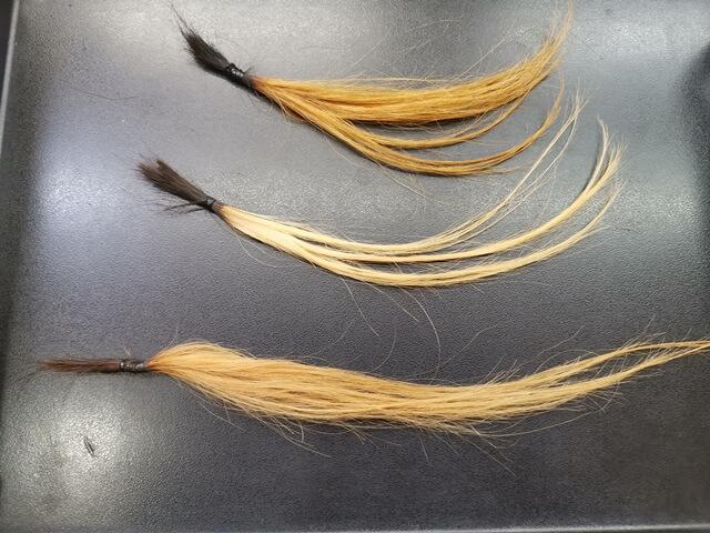 ブリーチ5回の髪の毛