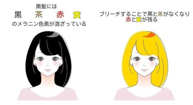 黒髪とブリーチの毛のメラニン色素の説明