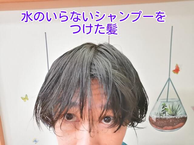 水のいらないシャンプーを使った直後の髪