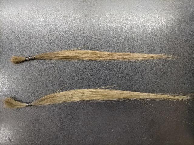 髪質改善トリートメントした二つの髪の毛