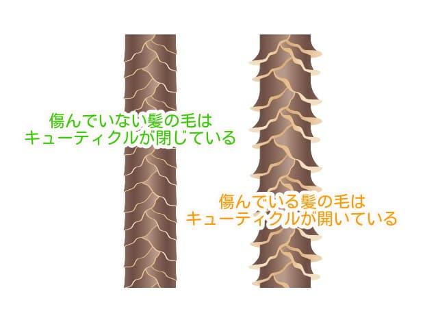 傷みによる髪のキューティクルの違い (1)